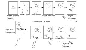 Relación de organelos