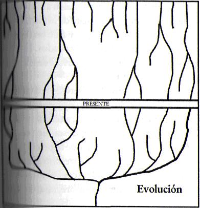 grafico sobre evolucion